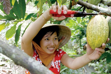 """From farming to chocolate"" model boosts Vietnam's cocoa reputation"