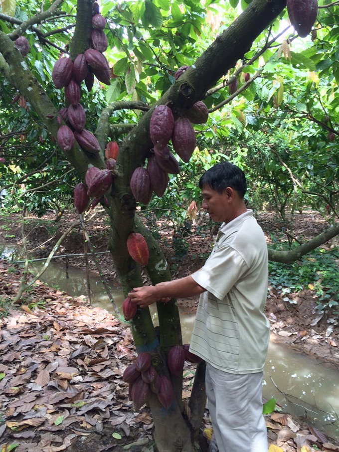 "Vietnam's cocoa receives ""fine flavour"" designation from Int'l Cocoa Organisation"